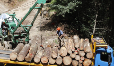 Mexico's environmental debts: advocates, budget and COVID