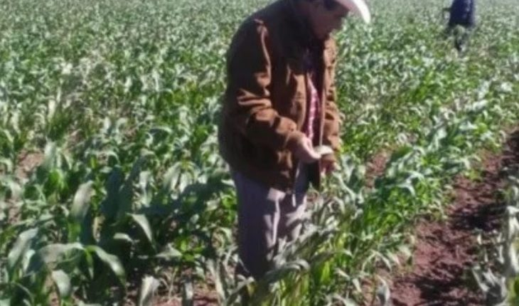 AARFS invites to secure corn crops in carrizo Valley