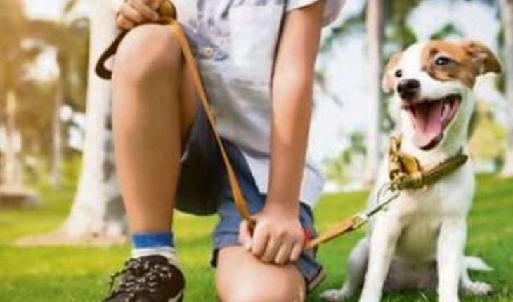 Give tips for coexistence between people and pets