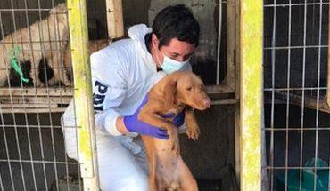 Detienen a sujeto que tenía a 34 perros hacinados y desnutridos en su patio en Puente Alto