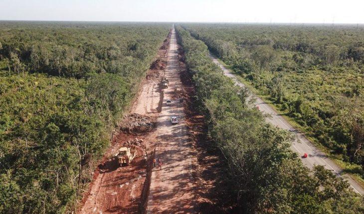 Jueza concede tres suspensiones contra Tren Maya en Yucatán