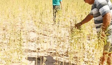 Ahome farmers continue to expect drought support