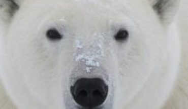 International Polar Bear Day: an icon of the impact of climate change