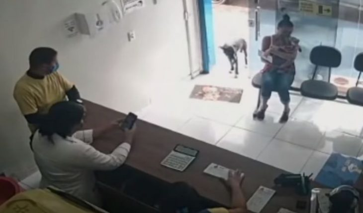 """[VIDEO] Wounded street dog entered a veterinary clinic by himself and """"asked for help"""""""