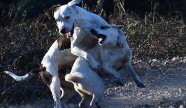 Aumentan las sanciones para el maltrato animal en Mazatlán