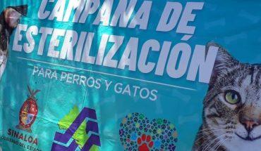 Campaña de esterilización de Angostura atiende a 58 mascotas