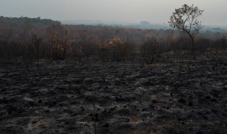Di Caprio, Caetano Veloso y otros artistas pidieron a Biden evitar acuerdo ambiental con Brasil