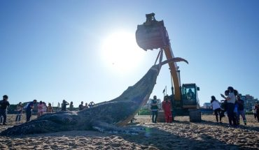 Las fotos más impactantes de la ballena que apareció muerta en Mar del Plata