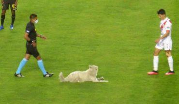 Perro roba tenis de futbolista y termina adoptado (Video)