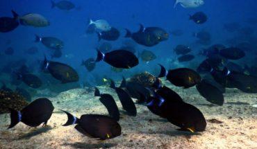 cambio climático pone en riesgo santuario marino en México