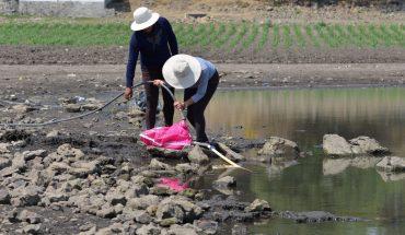 campesinos buscan no perder cultivos