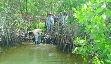 conservar y restaurar manglares en Latinoamérica