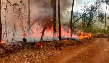 In four months, Morelia has been carrying 47 fires and grassland burns out of control