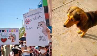 March in Sinaloa to seek justice for the puppy Rodolfo (video)