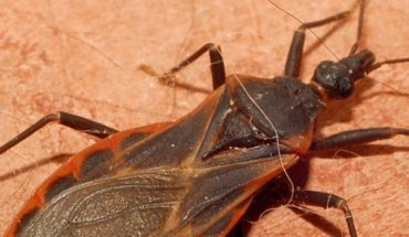 Today is World Chagas Disease Day
