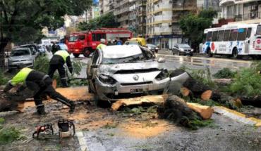 Cayó un árbol sobre un auto en Palermo y dejó dos heridos