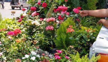Llegaron a Guamúchil las lindas flores del sur del país