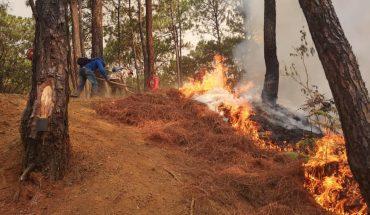 Reportan incendio en Cerro de la Cruz, Uruapan, Michoacán