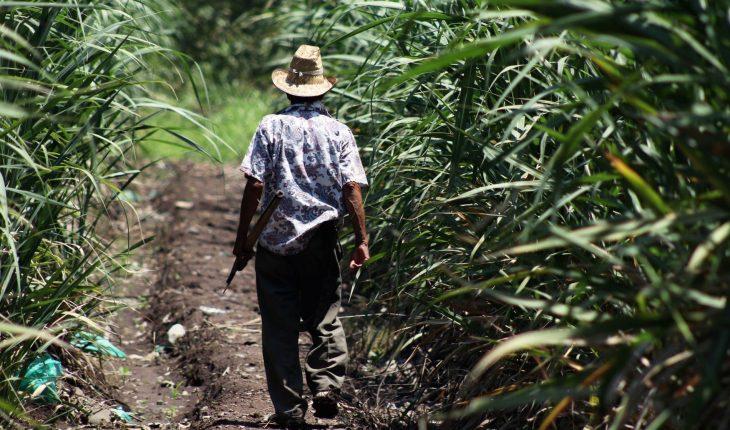 ASF denuncia desvío de 21 mil mdp de recursos al campo con EPN