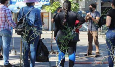 Buscan arborizar el Primer Cuadro de la ciudad de Culiacán