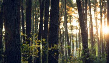 Día Mundial del Medio Ambiente: el desafío de revertir los daños sobre los ecosistemas