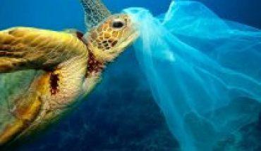 Día mundial del medioambiente: restaurando ecosistemas (y valores)