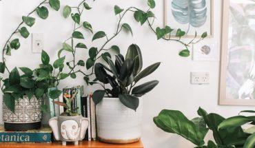 En el Día Mundial del Medioambiente, Spotify crea la primera colección para tus plant-hijas