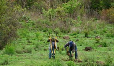 Gobierno de Morelia prepara Programa de Reforestación 2021
