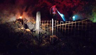 Incendio arrasa con 680 pacas de pastura en El Carrizo, Ahome