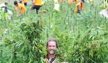 """Lo echaron del trabajo y ahora está cosechando marihuana en California: """"De 15, 12 somos argentinos"""""""