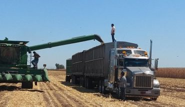 Reacciona el maíz en el mercado internacional