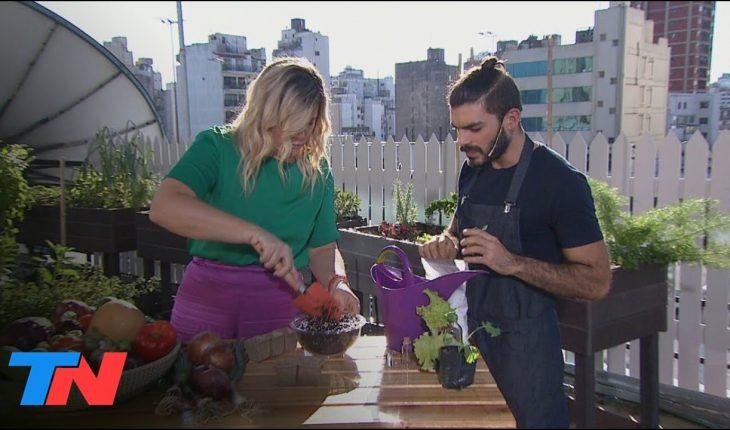 NUESTRA HUERTA EN CASA: cultivos, rúcula, kale y lechuga