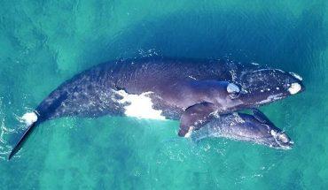 Campaign to prevent plastic pollution in the Argentine Sea