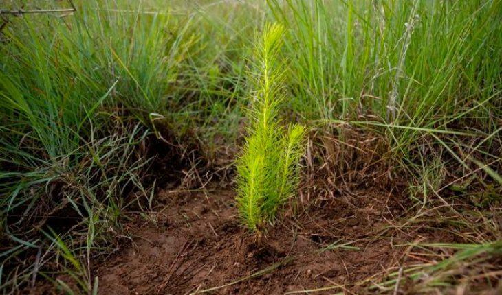 Gobierno de Morelia prioriza recuperación de cuencas hídricas y bosques