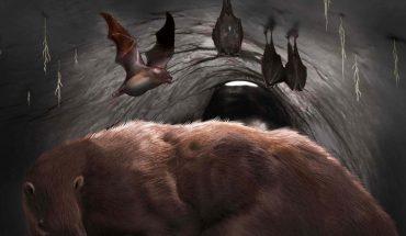 Miramar: hallan en una cueva el fósil de un vampiro extinto