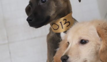 Edomex. They save 22 puppies; they took them off the street but they didn't take care of them