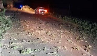 Strong wind causes falling trees on the road Los Mochis