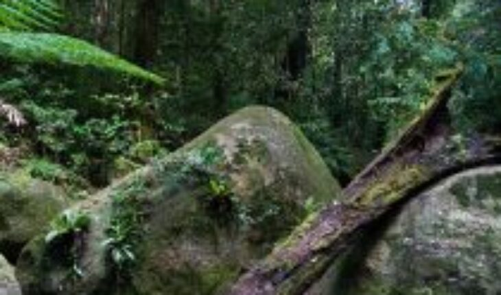 Australia devuelve el Parque Nacional de Daintree, la selva tropical más antigua del mundo, al pueblo Kuku Yalanji Oriental
