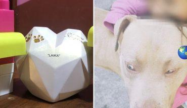 La perrita Laika, su urna de cenizas la acompañan perros de juguete en casa