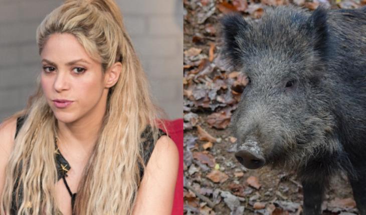 Shakira relata como fue atacada por jabalíes en Barcelona — Rock&Pop