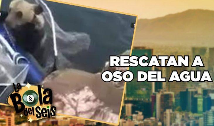 Rescatan a oso en medio de río   La Bola del 6