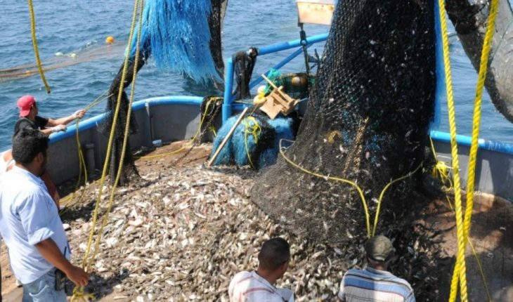 Regular catches reported in Mazatlan in the early days