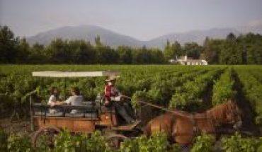 Vineyards prepare to celebrate Fiestas Patrias
