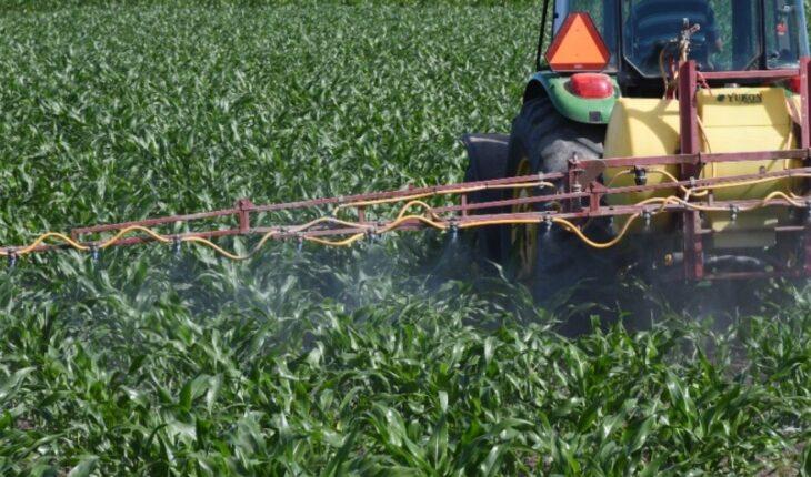 Aumento en fertilizantes afectará ciclo agrícola en el Évora en Sinaloa