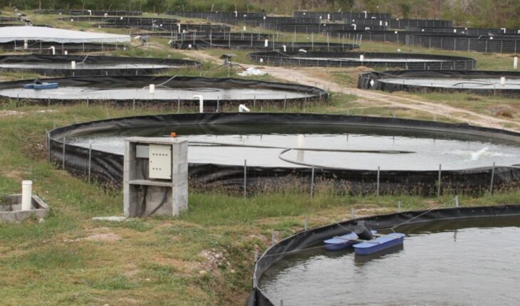 Call to renew, Special Electric Energy Program for Aquaculture Use 2022