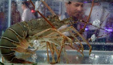 Conversamos sobre la prohibición de la cocción de animales acuáticos vivos en Un País Generoso — Rock&Pop