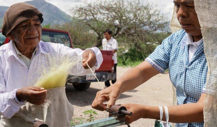 El ixtle, una fibra que está de vuelta como alternativa ecológica al plástico
