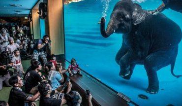 Estas son las ganadoras del 'Wildlife Photographer of the Year 2021'