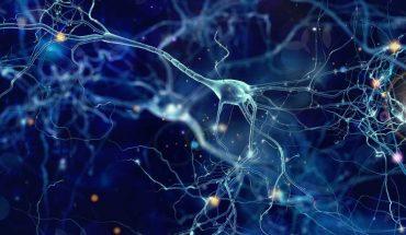 Lanzan una plataforma de e-learning en neurociencias