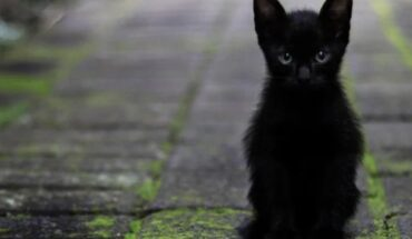 Octubre el mes en el que los gatitos corren peligro, conoce por qué